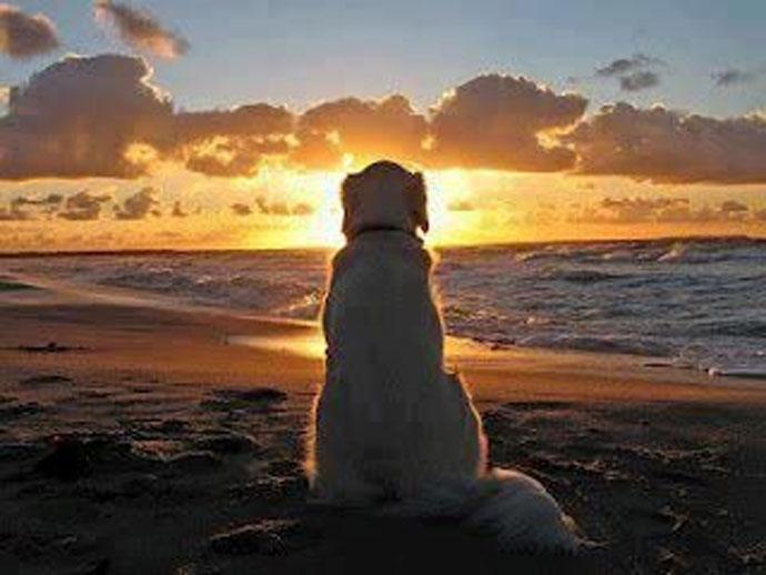 Ἡ ξεχωριστὴ σχέσις τῶν Ἀρχαίων Ἑλλήνων μὲ τὸν σκύλο.1