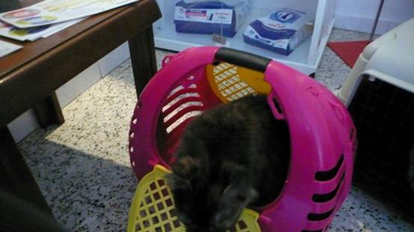 «Πήγαμε τὰ γατάκια μας στὸν κτηνίατρο!»2