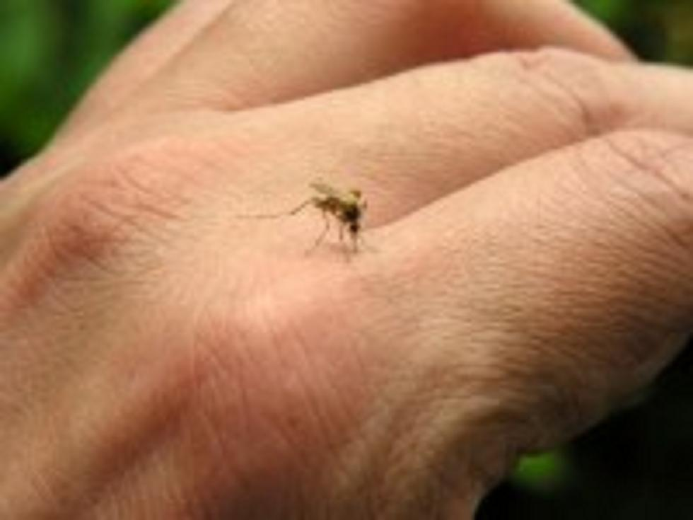 Νά διώξουμε τά κουνούπια ἀπό τήν ζωή μας;3