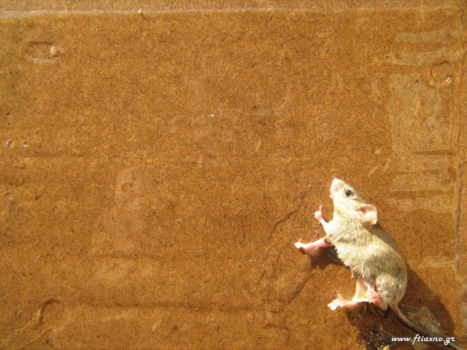 Φυσικὴ προστασία ἀπὸ ποντίκια, ψεῖρες καὶ λοιπὰ ἔντομα.