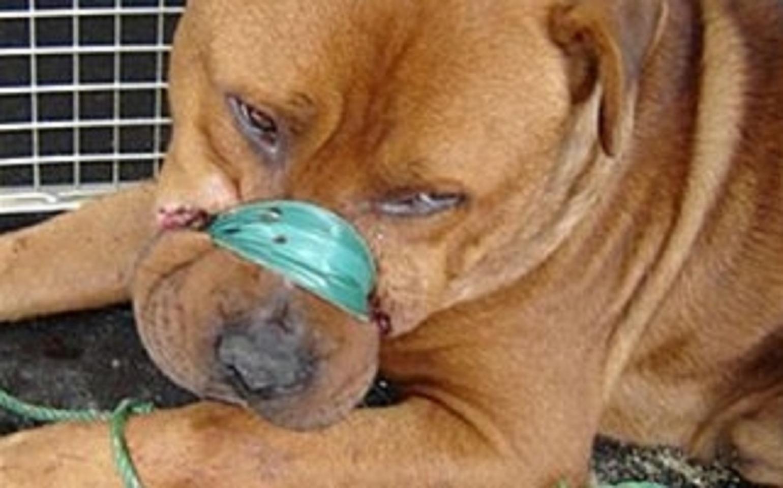 Ἔνδειξις ἐπικινδύνου ψυχασθενείας ἡ κακοποίησις τῶν ζώων!
