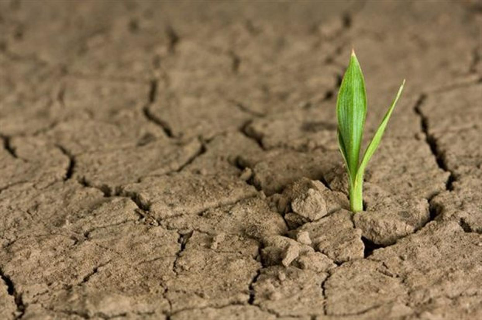 H αύξηση του διοξειδίου του άνθρακα στην ατμόσφαιρα ευνοεί την ανάπτυξη φυτών στις ερήμους
