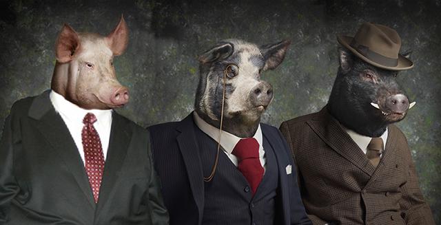 Ὅλα τὰ (ἀνθελληνικὰ) γουρούνια τὴν ἴδιαν μούρη ἔχουν!!!3