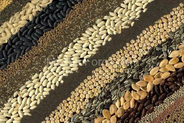 Ἀπαγόρευσις διακινήσεως σπόρων σημαίνει γενοκτονία!1