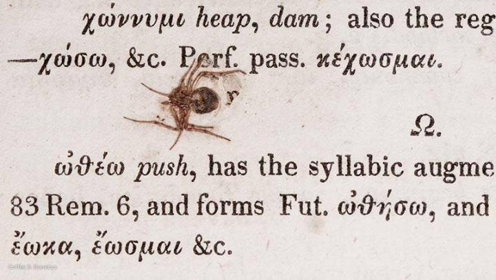 Ἡ μικρὰ τούτη ἀράχνη...