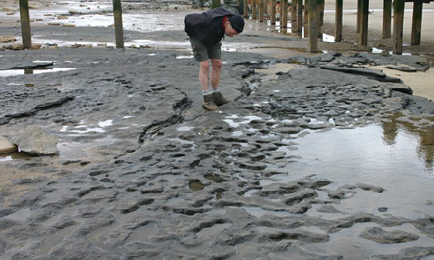 Footprints from Area A at Happisburgh, Norfolk. (Photo by Martin Bates)