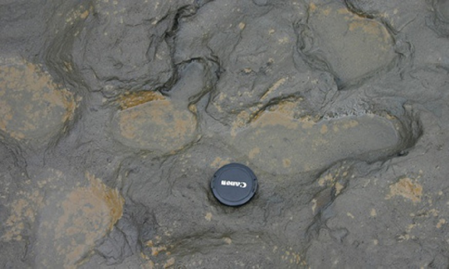 The size of the Happisburgh footprints compared to a camera lens cap. (Photo by Martin Bates)