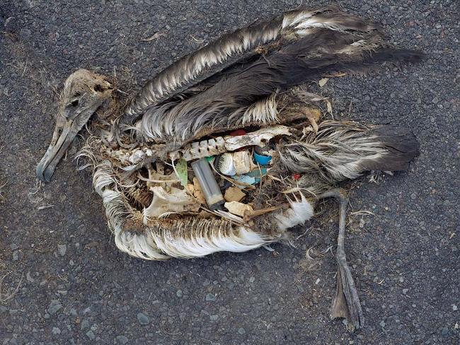 Συγκλονιστική περιβαλλοντική καταστροφή1