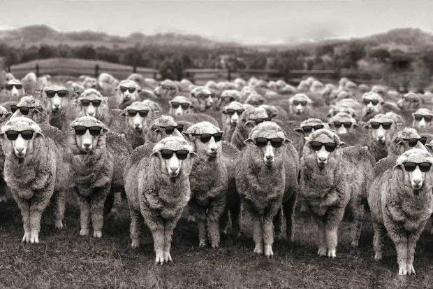 Ἐάν οἱ ἄλλοι εἶναι πρόβατα, μήπως ἐγώ εἶμαι ὁ ...τσοπάνης;
