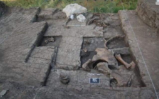 Μερική άποψη του χώρου της ανασκαφής με τμήμα του σκελετού του ελέφαντα ,