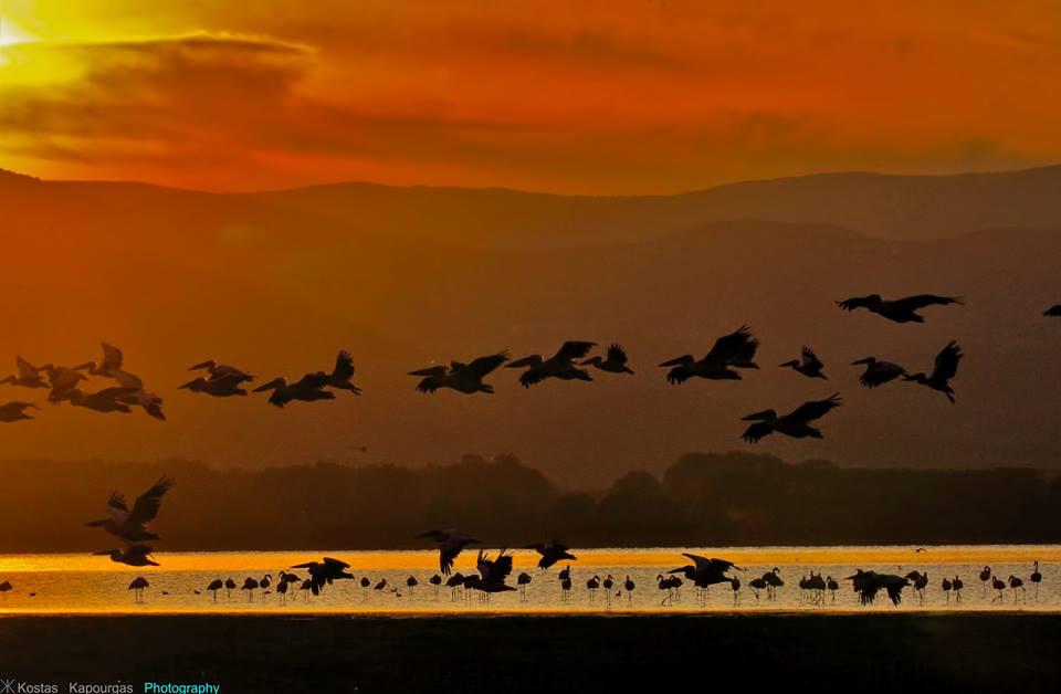 Ὅλες οἱ λίμνες εἶναι ...Κερκίνη!!!
