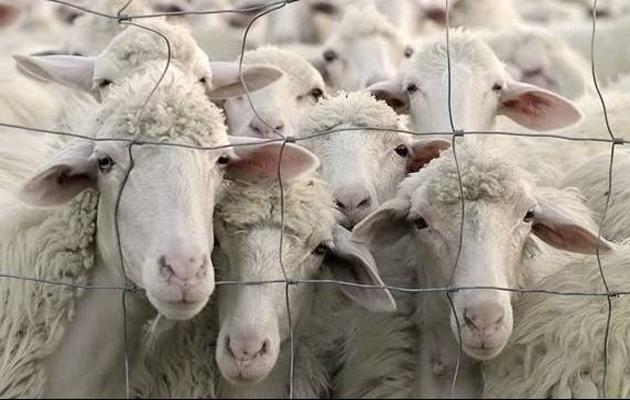 Λίγο πιὸ ...πρόβατα ἀπὸ τὰ πρόβατα!!!