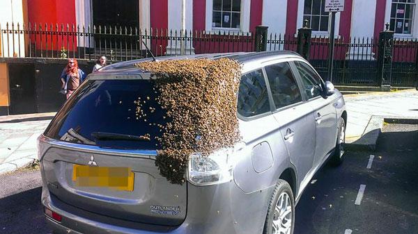 Μέλισσες προστατεύουν τὴν βασίλισσά τους