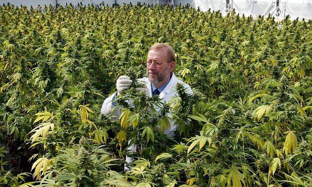 Ὥρα νά νομιμοποιηθῇ ἡ μαριχουάνα;