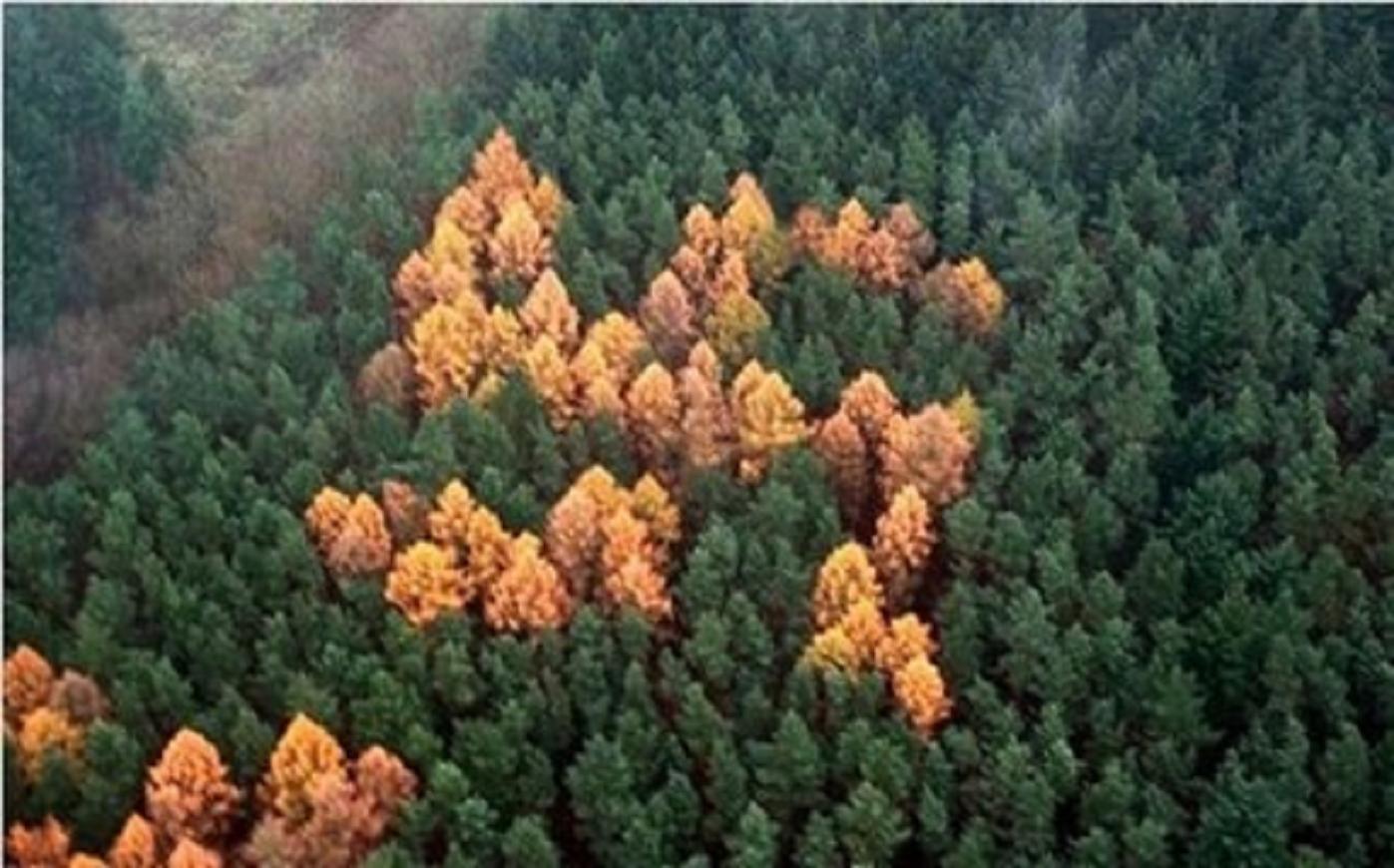 Τὸ δάσος μὲ τὶς Σβάστικες.