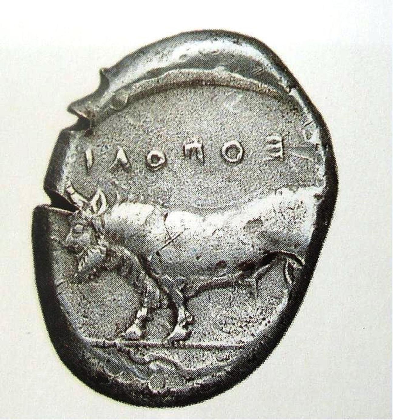 Νόμισμα της Νεάπολης, αποικίας της Κύμης, με έμβλημα ανθρωπόμορφου ταύρου, αγαπητό σε Έλληνες, Ετρούσκους και εντόπιους της Καμπανίας. Ο ανθρωπόμορφος ταύρος ήταν δημοφιλής και στην Κύμη και συνεπώς χρησιμοποιείτο ως έμβλημα στις επιφάνειες των ασπίδων αρκετών οπλιτών της.
