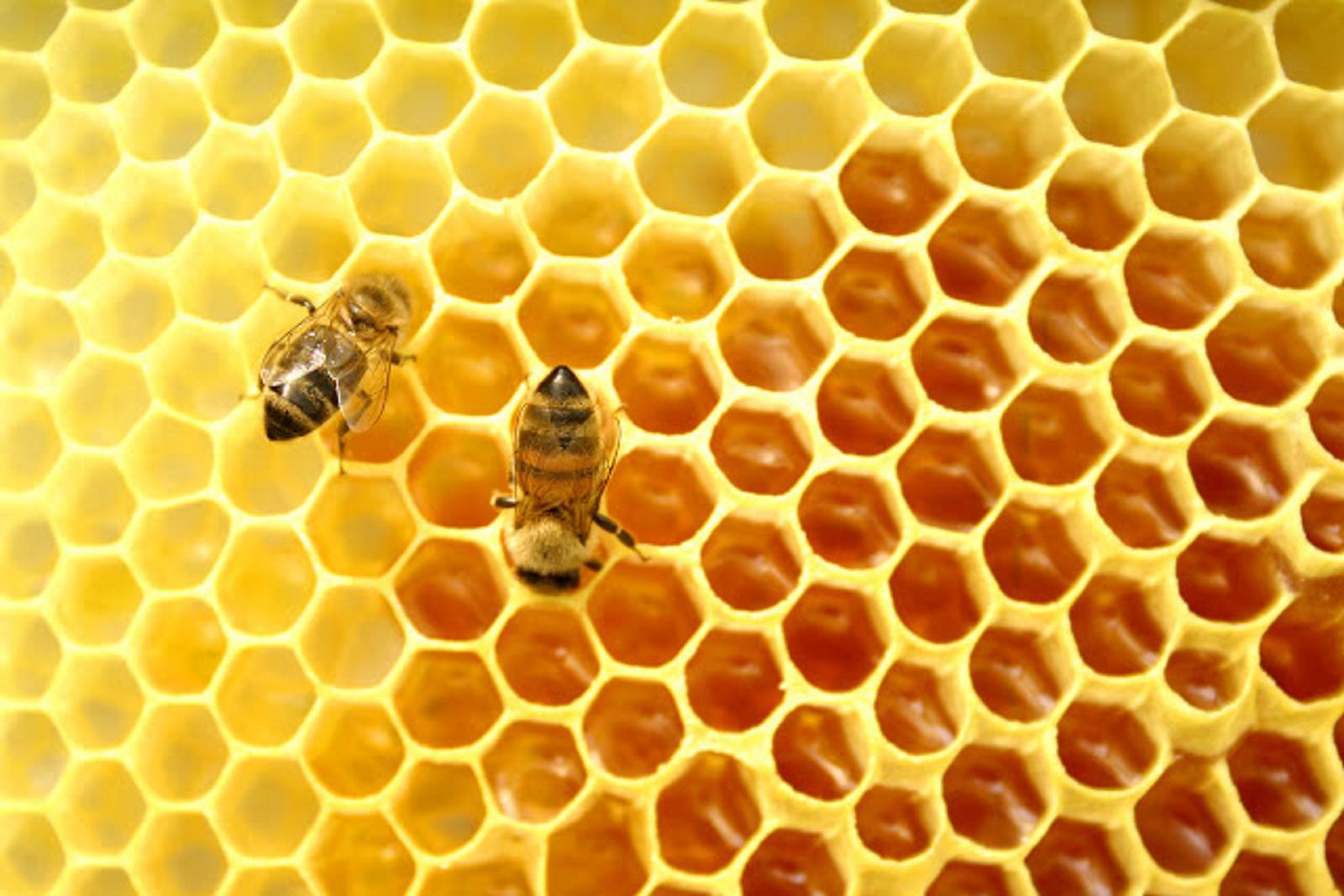 Τί εἶναι τό πολυτιμότερον πού μᾶς δίδουν οἱ μέλισσες;