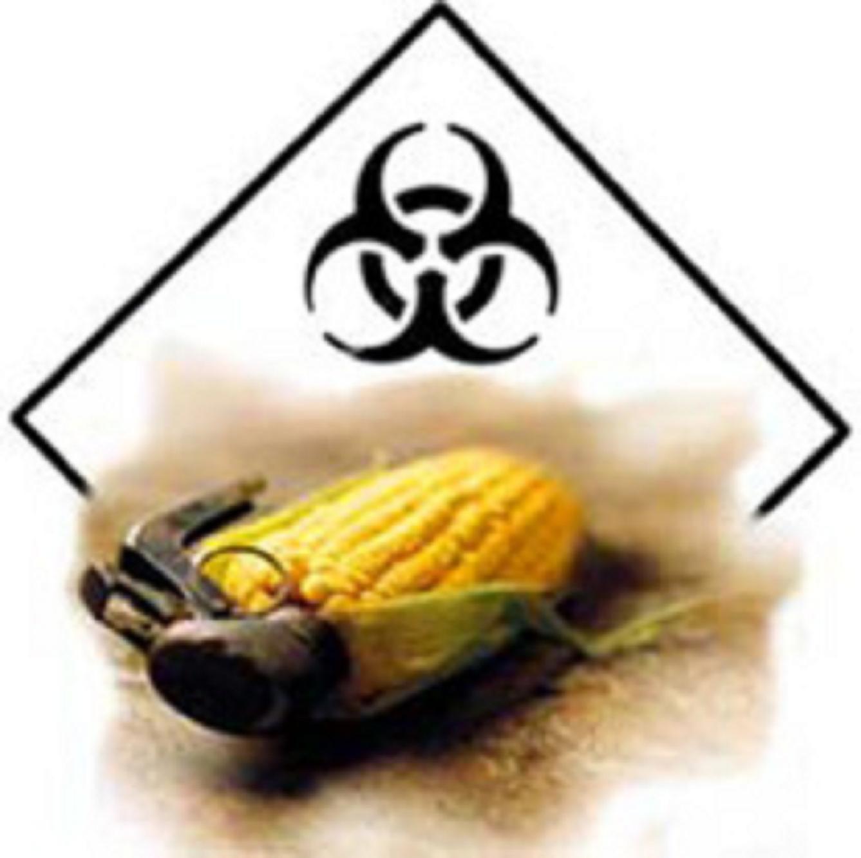 Τώρα ἔχουμε Ὑπερζιζάνια καὶ Ὑπερέντομα χάριν στὴν Monsanto!