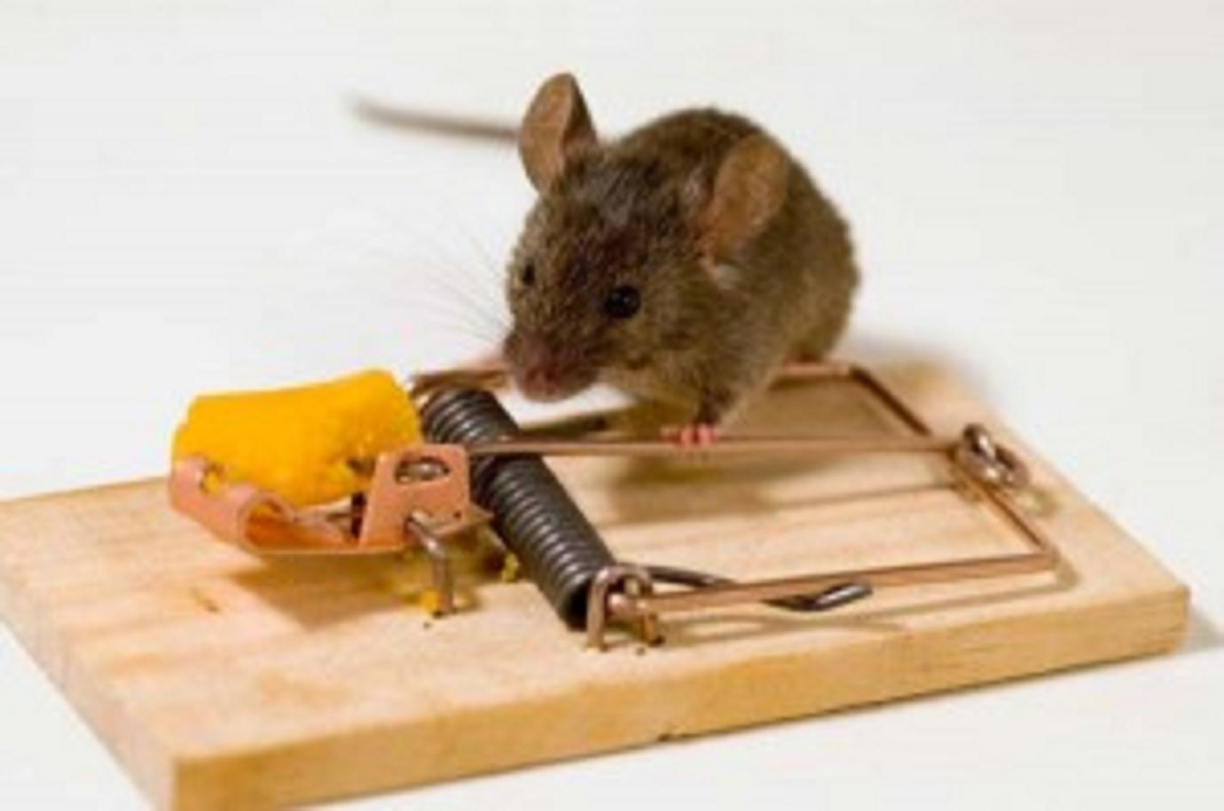 Ἡ ποντικοπαγίδα!