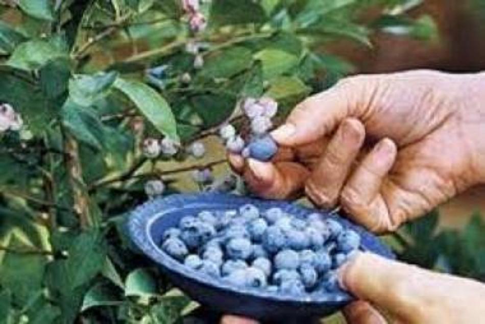 Ποιοί εἶναι οἱ ἐγκεκριμένοι σπόροι γιά νά γλυτώσουμε τό πρόστιμο;