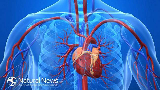 Στεφανιαία καρδιακὴ νόσος, ἕξι βήματα γιὰ νὰ τὴν θεραπεύσετε Φυσικά