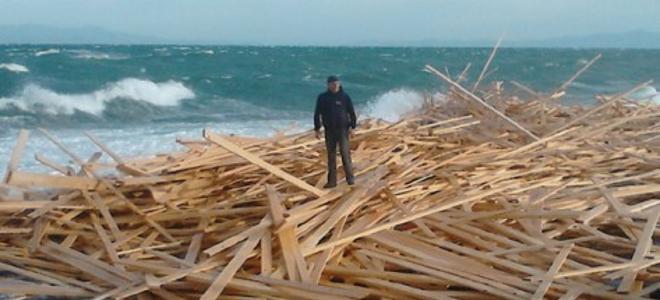 Ξέβρασε ἡ θάλασσα ξύλα καὶ ἡ ἐφορία ...βαμπιριάζει!