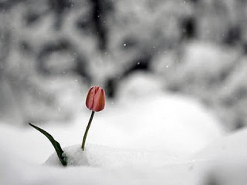 Κι ὅταν ἀρχίζῃς νὰ διακρίνῃς τοὺς σπόρους τῆς εὐκαιρίας μέσα ἀπὸ τὴν καταστροφή...