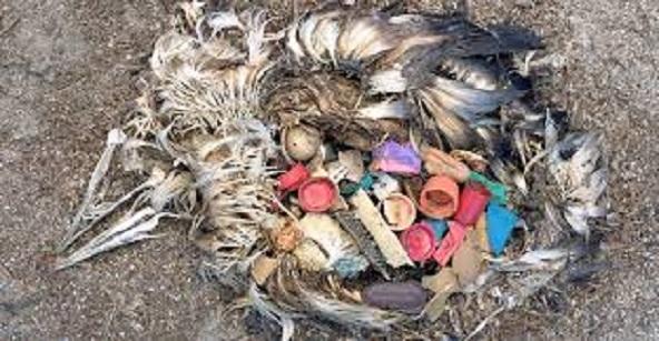 Συγκλονιστική περιβαλλοντική καταστροφή2