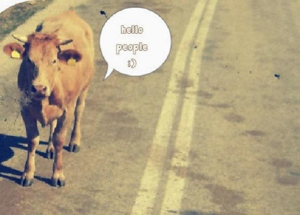 Μία ψόφια ἀγελάδα....;;; Ναί,ἀλλά γιατί «ψόφησε»;;;1