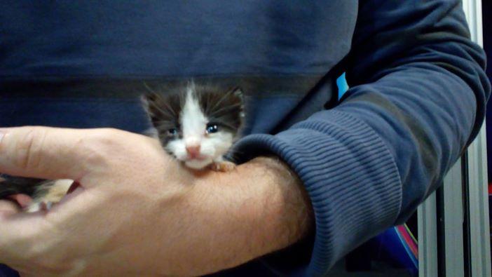240bc70ae779 Πῶς νά σώσουμε νεογέννητα γατάκια