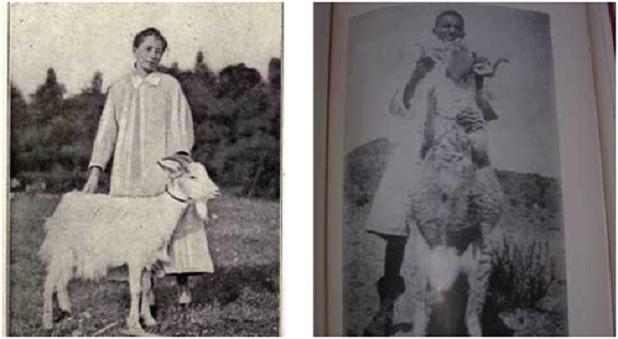 Κατσίκα της δεκαετίας του 1920 με μεταμόσχευση όρχεων τράγου. Παρέμεινε μικρή σε μέγεθος. Δεξιά, προβατίνα πού υπεβλήθη σε μεταμόσχευση όρχεων κριαριού με αποτέλεσμα να αυξηθεί το μαλλί της (υπήρξε πολιτική αύξησης της παραγωγής του ερίου μέσω της μεταμοσχεύσεως όρχεων σε θηλυκά ζώα από γαλλικές εταιρείες, την δεκαετία του 1920).
