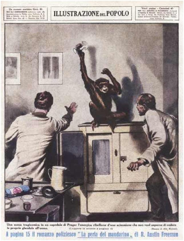 Ιταλικό περιοδικό της εποχής πού απεικονίζει «το – υποτιθέμενο – εργαστήριο του Voronoff» όπου ο ίδιος με συνάδελφό του προσπαθούν να συλλάβουν έναν χιμπατζή, προσαρμοσμένο σε αστυνομικό μυθιστόρημα του R. Austin Freeman.
