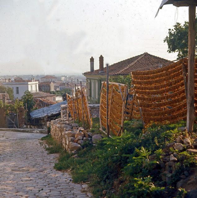 Μέχρι τη δεκαετία του 1990 κάτοικοι της Ξάνθης καλλιεργούσαν καπνό σε κλήρους κοντά στην πόλη.