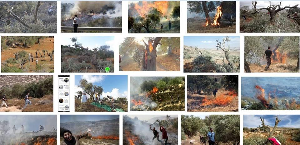 Φωτιὲς στὴν Παλαιστίνη ποὺ ...δὲν ὑπάρχουν!!!2